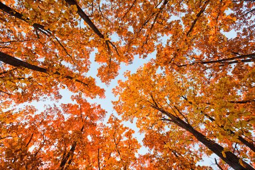 3 Spots for Great Fall Foliage banner
